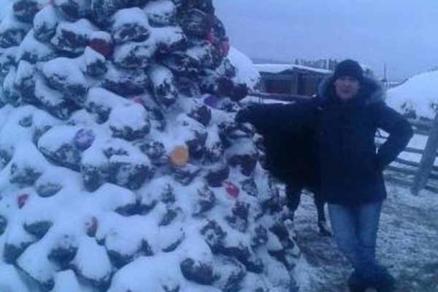 Запахло праздником. В РФ слепили новогоднюю елку из навоза