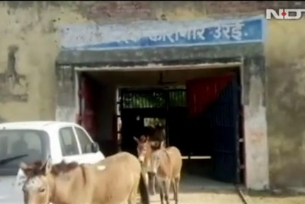 Стадо ослов в Индии посадили в тюрьму