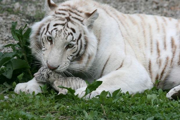 Владелец зоопарков Крыма будет требовать отставки «прокурора» Поклонской