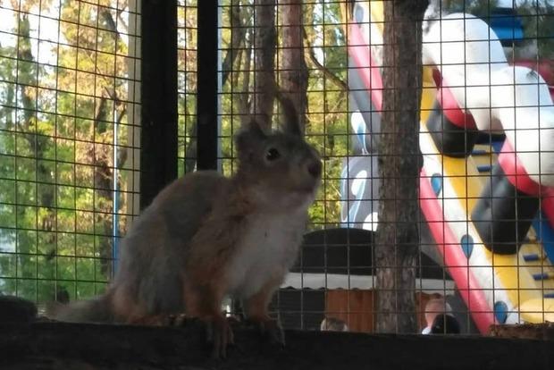 Кременчужане просят мэра закрыть каторгу животных в местном сквере