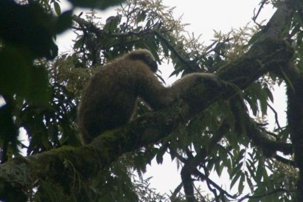 Новый вид приматов назвали в честь героя «Звездных войн»