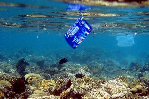 Океаническая рыба ест пластик. Через 33 года его будет больше в океанах, чем рыбы