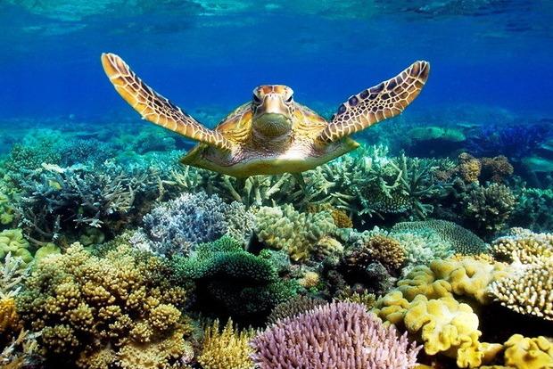 Австралийский Большой барьерный риф стоит миллиарды, но безвозвратно гибнет