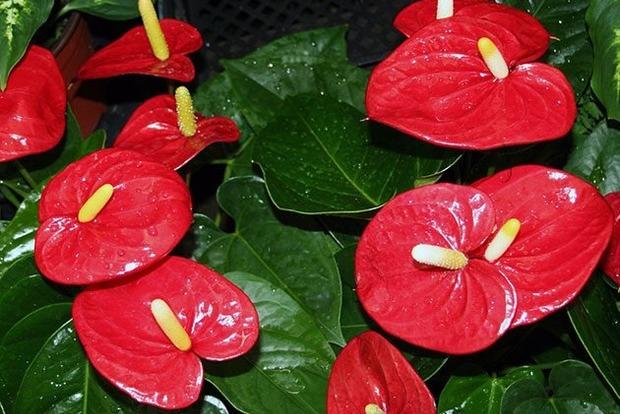 Какие цветы надо держать в доме на удачу