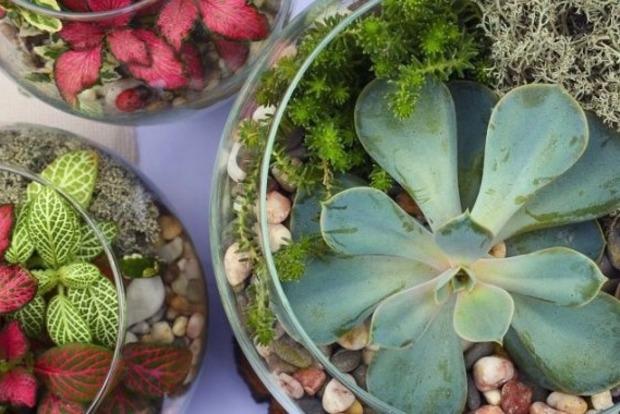 Актуально зимой: Комнатные растения, которые выживают почти в полной темноте