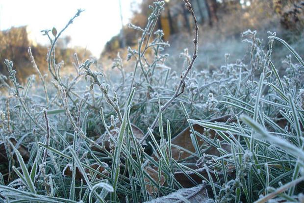 Завтра в четырех областях Украины ударят заморозки