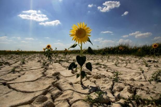Сильных потерь урожая из-за засухи по итогам этого года не будет - эксперт