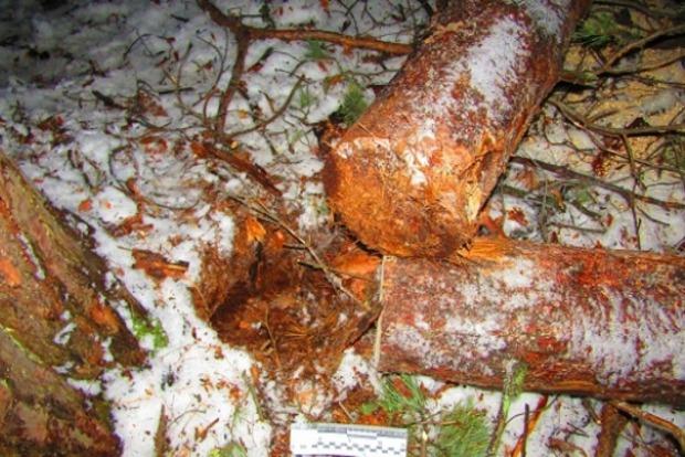 В Киеве во время планового срезания деревьев погиб лесник
