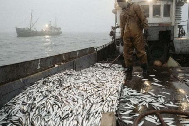 85% импорта и сокращение потребления в три раза. Украинская рыбная отрасль на грани исчезновения