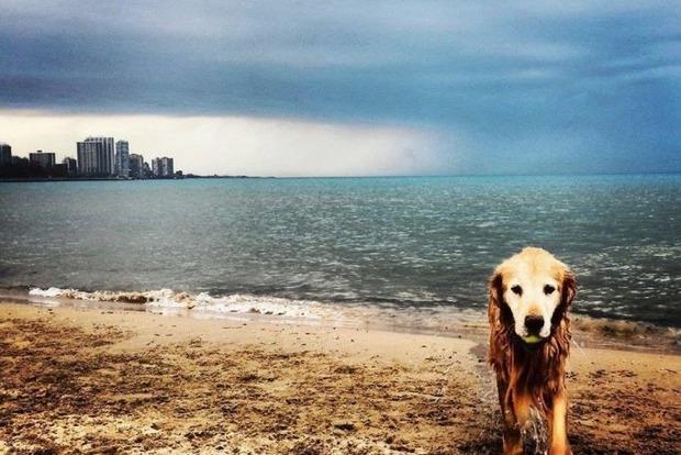 Прощальный привет умершей собаки своей хозяйке попал на фото