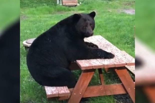 На Алясці жителів вразив ведмідь, що сидить за столом