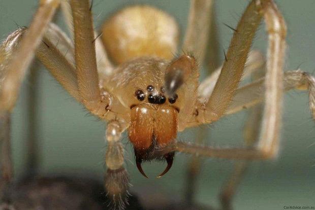 Полчища отруйних павуків окупували Башкирію і стрімко розмножуються