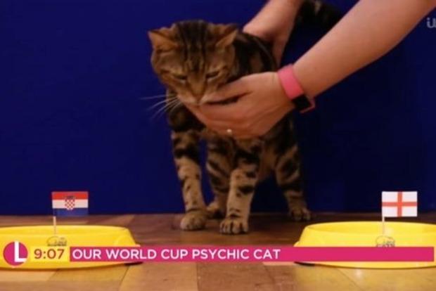 Кошка-гадалка предсказала исход игры Англия - Хорватия