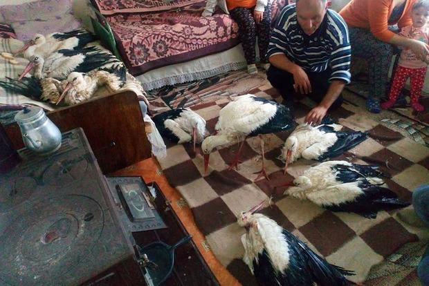 Болгары разбирают окоченевших аистов по домам
