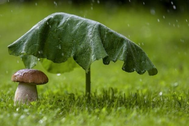 Украинцев предупреждают про ухудшение погодных условий. Осень приближается.