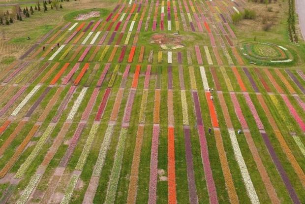 В Добропарке расцвел миллион тюльпанов. Как это выглядит с высоты птичьего полета?