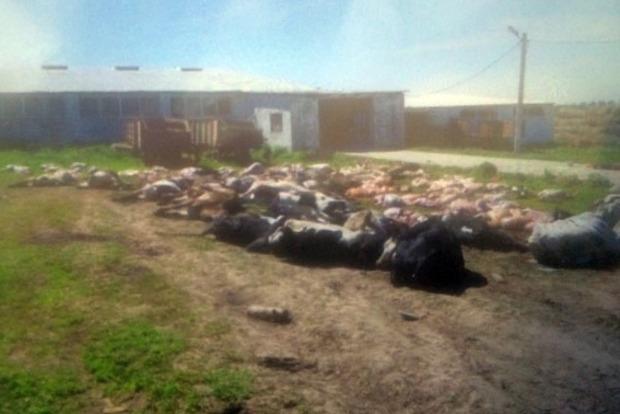 У Хмельницькій області у фермера за ніч померли 88 корів