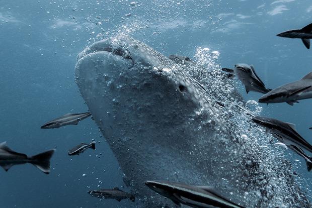 На Філіппінах туриста ледь не засмоктало в пащу акули