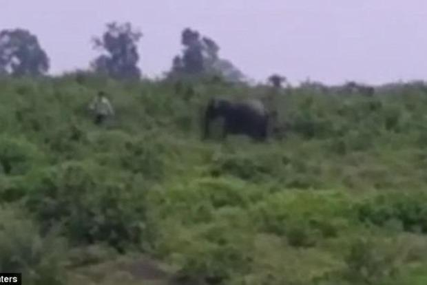 В Индии слон затоптал пьяного мужчину во время попытки сделать селфи