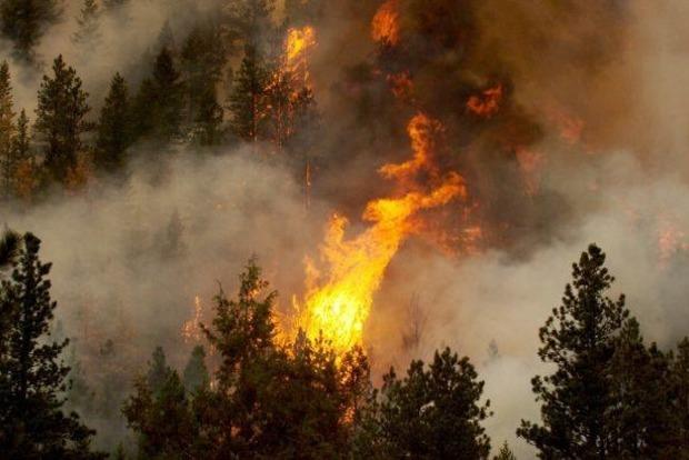 В Днепропетровской области загорелись 50 гектаров леса