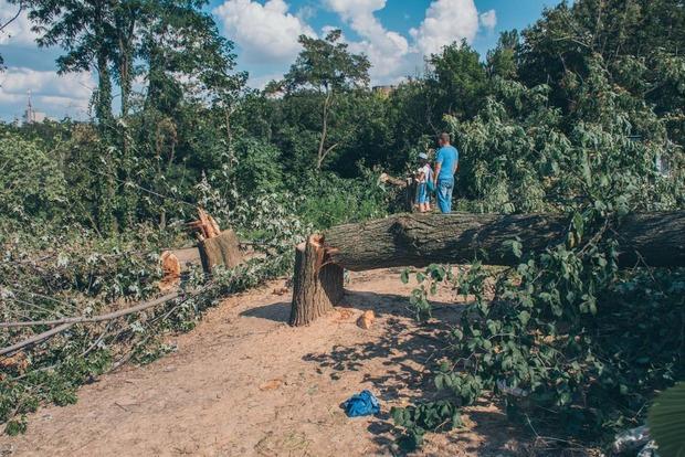 Резня бензопилой: Киевзеленстрой утверждает, что вырезает лес в Протасовом Яру законно