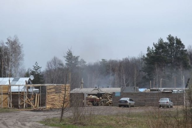 В Житомирской области процветает вырубка леса ради древесного угля