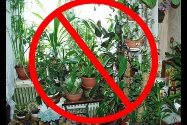 Комнатные растений, от которых теряешь сон, волосы и женихов