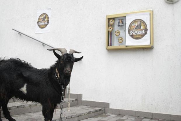 Активисты Нацкорпуса привели под посольство Чехии живого козла