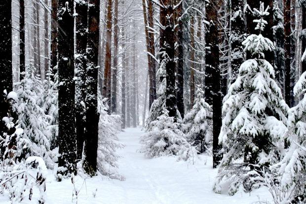 В Черниговской области обнаружили разлив неизвестных химикатов в лесу