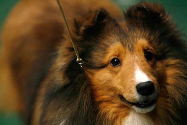 Ирландец сварил из своей собаки рагу и скормил другим псам