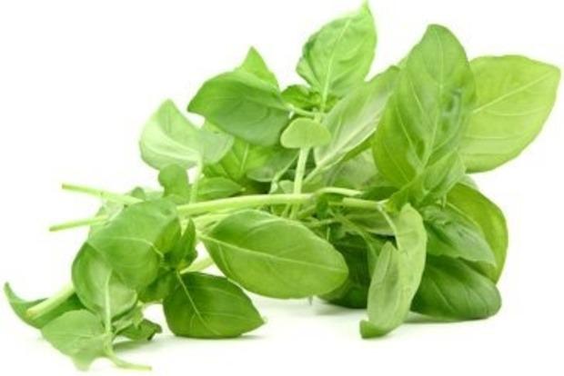 Базилік: корисні властивості і кому протипоказана пряна рослина