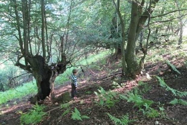 В лесу Закарпатья браконьер подстрелил 9-летнего мальчика, собиравшего грибы
