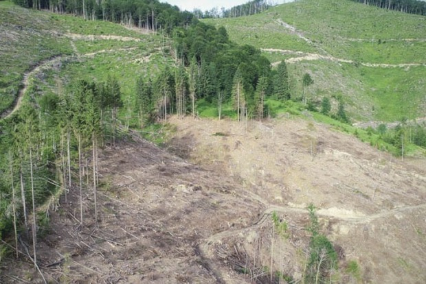 Лесхозы жируют: Экологи показали масштабы рубки лесов Киевщины с неба