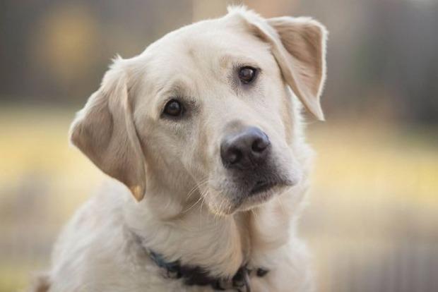 Собаки делают щенячью мордочку ради людей - ученые