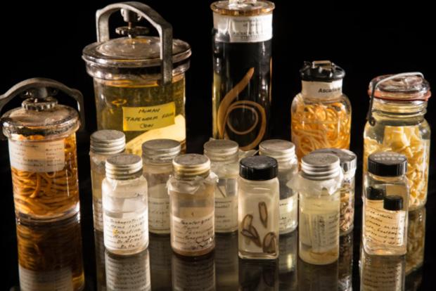 Ученые: Треть насекомых иклещей вымрет к 2070г