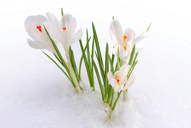 Синоптики сказали, коли в Україну прийде справжня весна