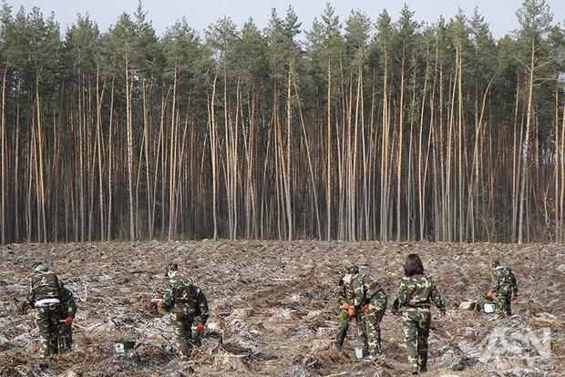 Украину вынудят снять мораторий на вывоз леса - эксперт