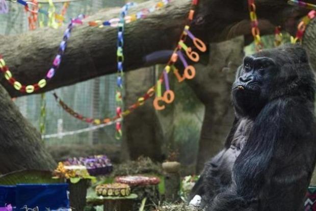 В США умерла самая старая горилла в мире