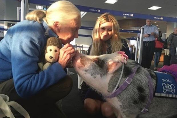 На работу в аэропорты США набирают собак, кошек и свиней