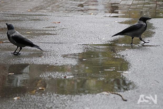 В ближайшие сутки Украину охватит прохладный и влажный воздух