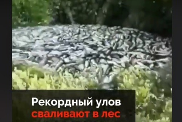 Ні собі ні людям: Росіяни на Камчатці викидають сотні тонн лосося з ікрою