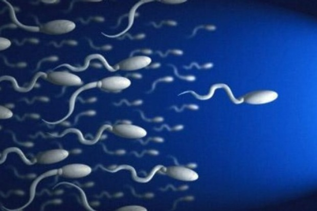 Сперматозоиды могут лечить женскую онкологию
