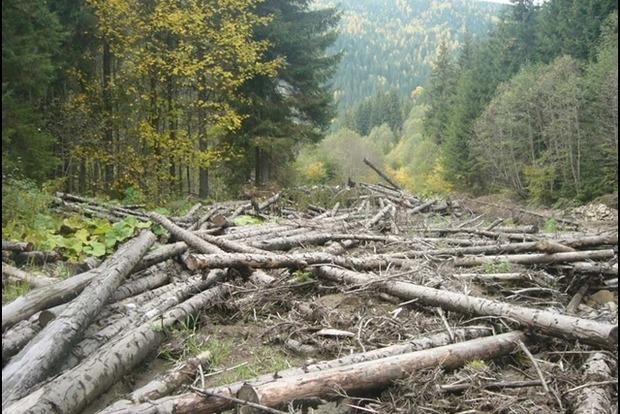 ЕС заявили, что мораторий на экспорт леса не остановил вырубку украинских лесов