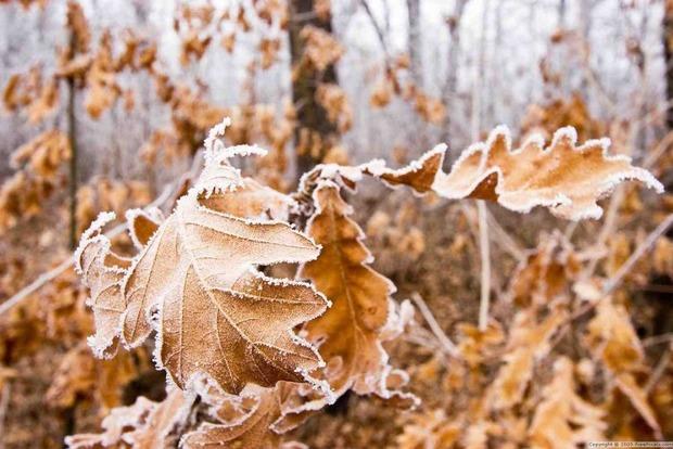 В пятницу и субботу в Украине будет холодно, без осадков, ночью ожидаются заморозки