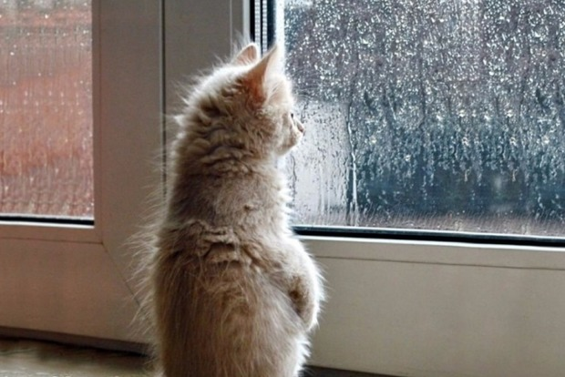 Погода на 9 червня: на заході і в центрі України пройдуть дощі