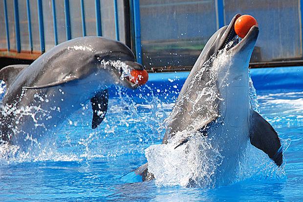 Минэкологии готовит закон о запрете дельфинариев и построит санаторий для дельфинов