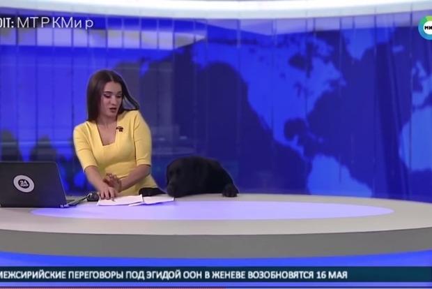 На российском телеканале лабрадор сорвал прямой эфир и напугал ведущую
