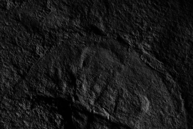 Вчені назвали копалину на честь Дарта Вейдера