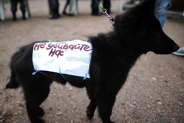Картинки по запросу відповідальності за жорстоке поводження з тваринами