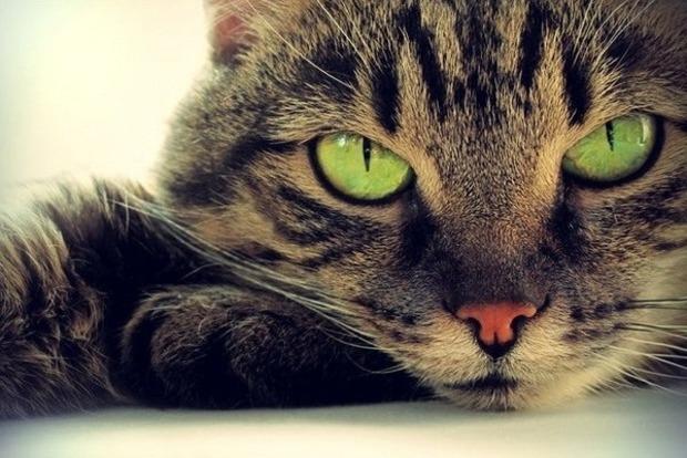 Почему кошки чувствуют смерть человека. Несколько версий